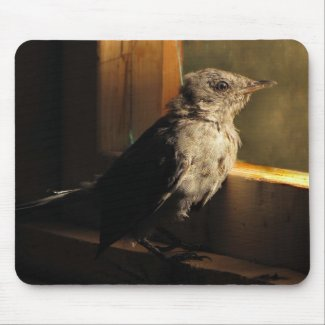 Baby Catbird Mouse Pad