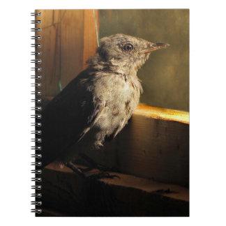 Baby Catbird Spiral Notebook
