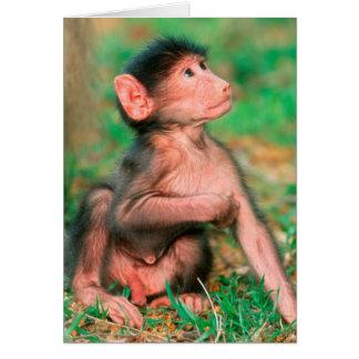 Baby Chacma Baboon (Papio Ursinus) Cards