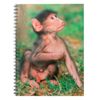 Baby Chacma Baboon (Papio Ursinus) Note Books
