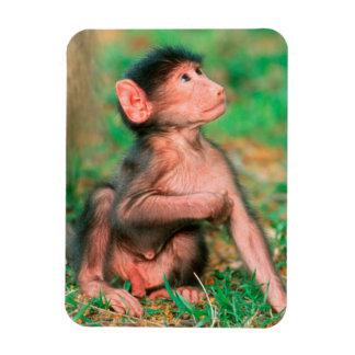 Baby Chacma Baboon (Papio Ursinus) Rectangular Magnet