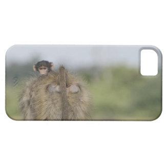 Baby Chacma Baboon (Papio ursinus) riding iPhone 5 Covers