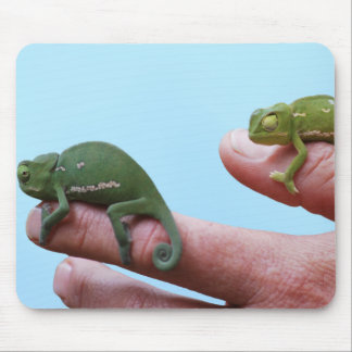 Baby chameleon perspective mouse pad