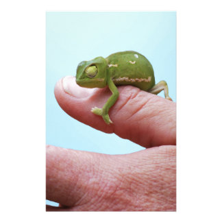 Baby chameleon perspective stationery
