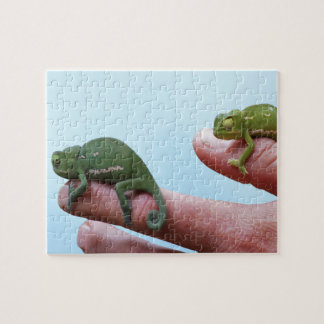Baby chameleons perspective jigsaw puzzle