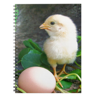 Baby Chick Chicken With Pink Egg Notebook