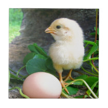 Baby Chick Chicken With Pink Egg Tile