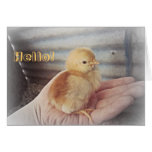 """Baby Chick """"Hello"""" Card"""