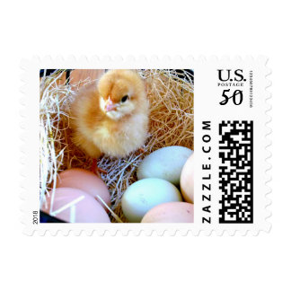 Baby Chick in Basket Postage