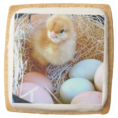 Baby Chick in Easter Basket - Cookies