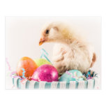 Baby Chick in Easter Basket Postcard