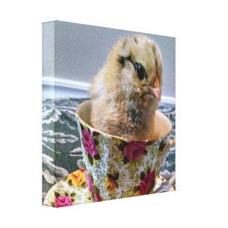 Baby Chick in Tea Cup Canvas Print