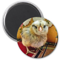 Baby Chick Magnet Farm Magnet
