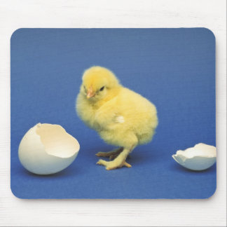 Baby chick mouse pad
