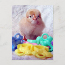 Baby Chick, Perfect For Baby Shower Invitation Postcard