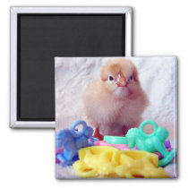 Baby Chick, Perfect For Baby Shower Magnet