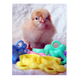 Baby Chick, Perfect For Baby Shower Postcard