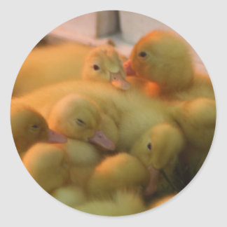 Baby Chick Pile Classic Round Sticker