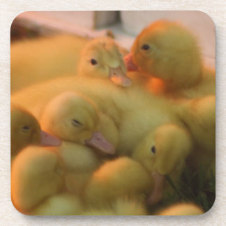 Baby Chick Pile Coaster