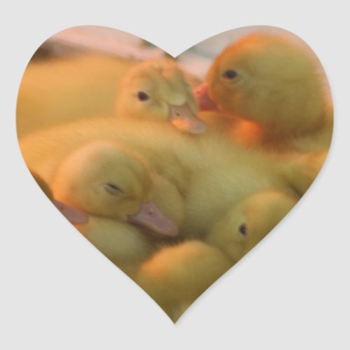 Baby Chick Pile Heart Sticker