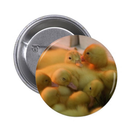 Baby Chick Pile Pinback Buttons