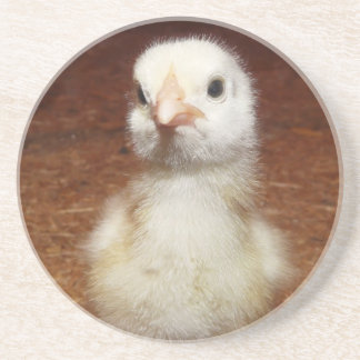 Baby Chick Sandstone Coaster