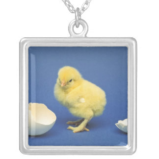 Baby chick square pendant necklace
