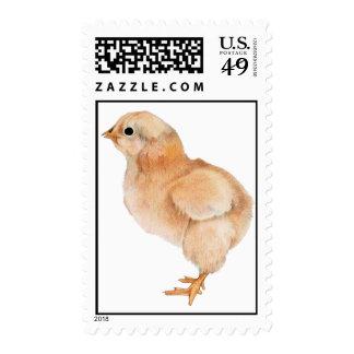 Baby Chick Stamp