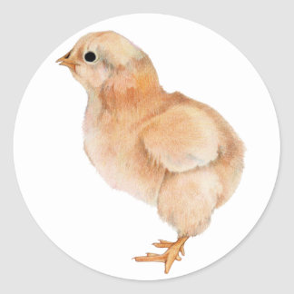 Baby Chick Sticker