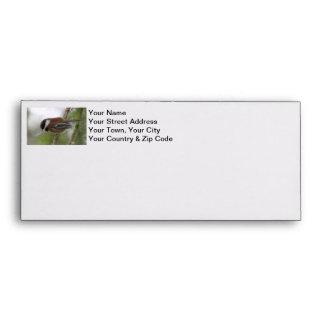 Baby Chickadee Photo Envelope