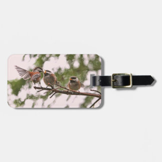 Baby Chickadees and Mother Bird Luggage Tags