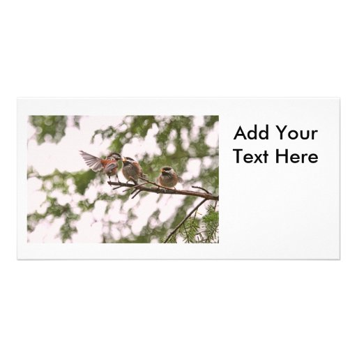 Baby Chickadees and Mother Bird Customized Photo Card