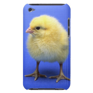 Baby chicken. barely there iPod cover