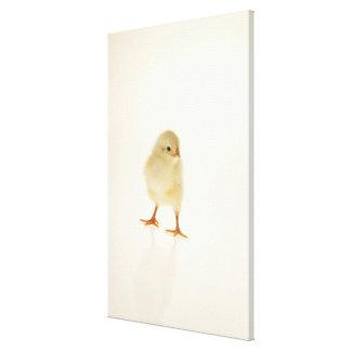 Baby chicken canvas print
