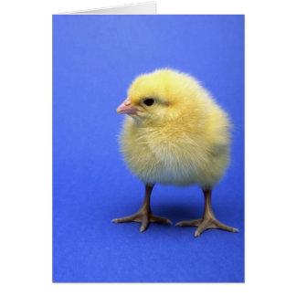 Baby chicken. card