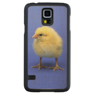Baby chicken. carved® maple galaxy s5 slim case