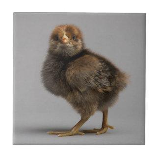 Baby Chicken Ceramic Tile