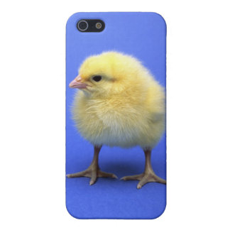 Baby chicken. cover for iPhone SE/5/5s