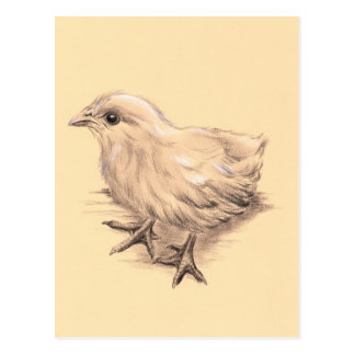 Baby Chicken Drawing Postcard