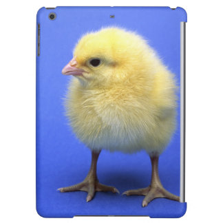 Baby chicken. iPad air cases