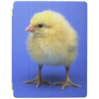 Baby chicken. iPad smart cover