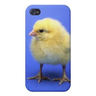 Baby chicken. iPhone 4 case
