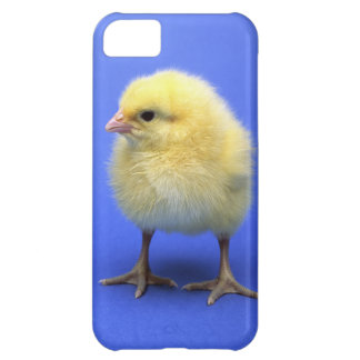 Baby chicken. iPhone 5C cover