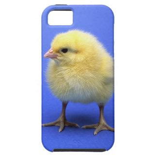 Baby chicken. iPhone SE/5/5s case