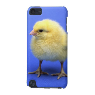 Baby chicken. iPod touch (5th generation) cover