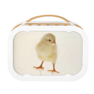 Baby chicken lunch box