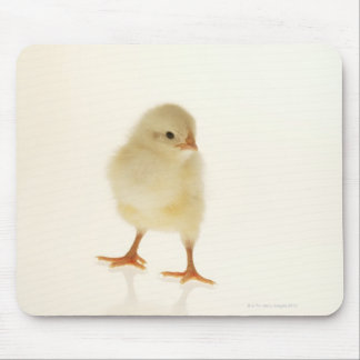 Baby chicken mouse pad
