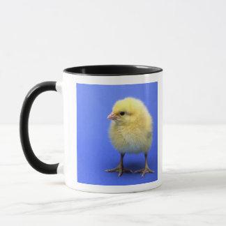 Baby chicken. mug