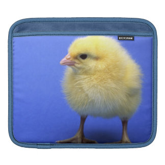 Baby chicken. sleeve for iPads