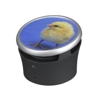 Baby chicken. speaker